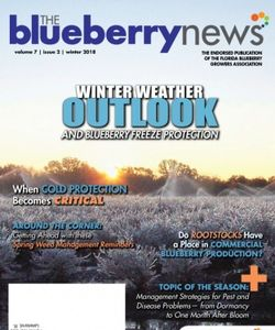 The Blueberry News