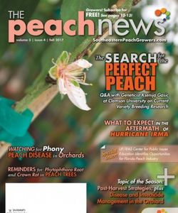 The Peach News